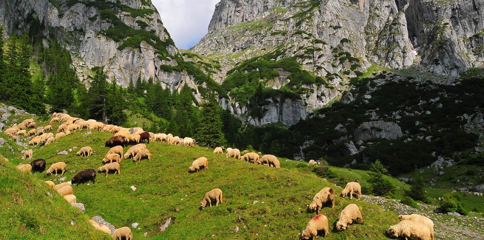 hiking-bucegi-mountains-9